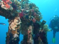 Dive on colourful reefs or wrecks covered in sponges, anemones and corals