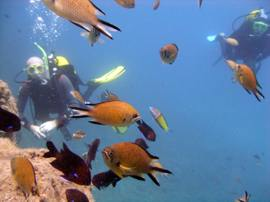 Dive into shoals of damselfish in Gran Canaria