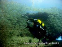 Stim av roncadors (Bastard Grunts) är imponerande syn i Pasito Blanco Reef