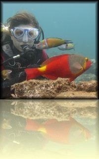 Kommen Sie näher an die Farben und die Vielfalt im Meeres-Reservat in Arinaga