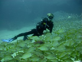 A finales del invierno en Gran Canaria son recomendables los guantes y capuchas en aguas profundas de la reserva marina del cabrón