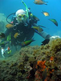 Diving in Gran Canaria surrounded by lots of colourful fish.