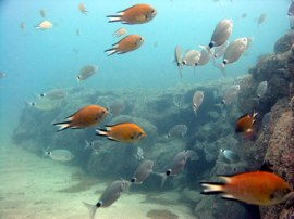 Gran Canaria for your PADI open water training dives