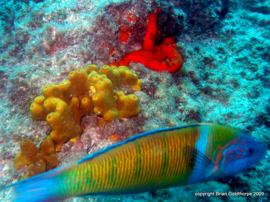 get colourful photos and improve your underwater photography