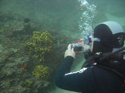 Improve your underwater photography on this course in Gran Canaria