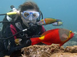 Dive in the Canaries and Brightly coloured Parrotfish and Wrasse are common