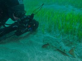 An diver photographs a baby angel shark in Gran canaria