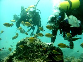 No need to be stoney cold when the warm waters of Gran Canaria with its wonderful marine life awits you